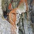 哈尤溪溫泉11