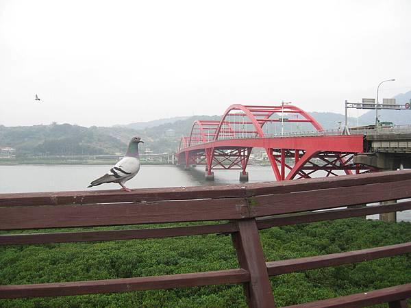 1000409鴿子與橋