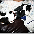 COW COW_01