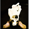 COW COW_02