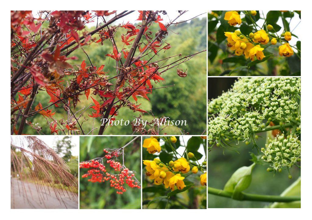 快活林附近的花卉
