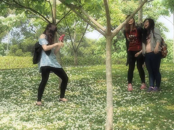 油桐花開了