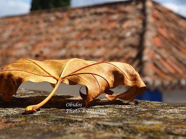 葡萄牙小鎮歐比都斯 秋色