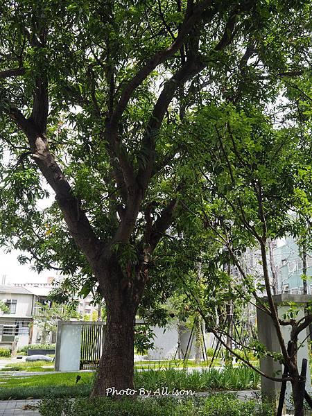 台中文學館的芒果樹