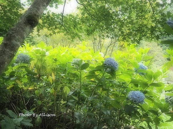 杉林溪祕密花園