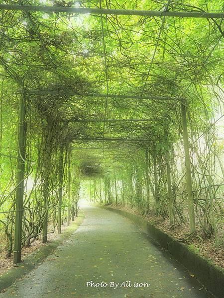 杉林溪綠色走廊