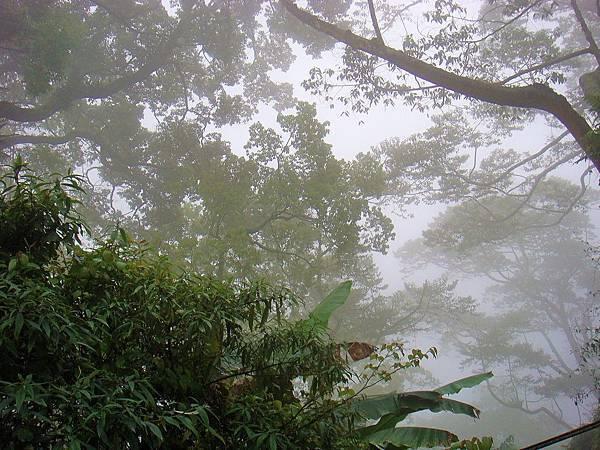 迷霧身森林.jpg