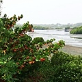 台江3.jpg