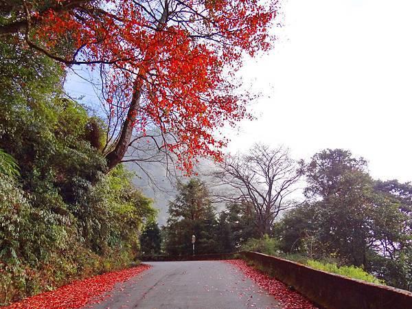 路兩旁的落葉楓紅層層