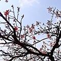 2014阿里山05.jpg