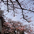 2014阿里山07.jpg