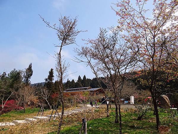 2014阿里山09.jpg