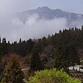 2014阿里山14.jpg