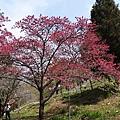 2014阿里山12.jpg
