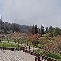 2014阿里山13.jpg