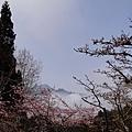 2014阿里山26.jpg