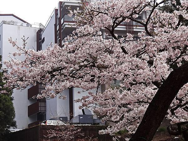 2014阿里山25.jpg