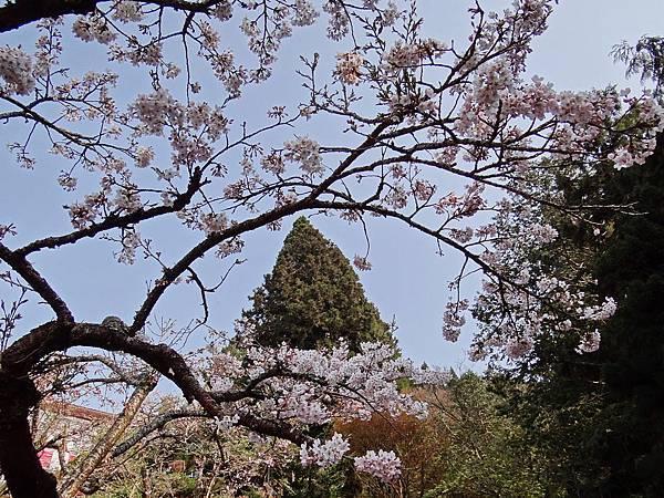 2014阿里山30.jpg