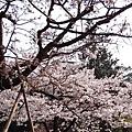 2014阿里山35.jpg