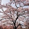 2014阿里山34.jpg