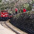 2014阿里山52.jpg