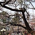 2014阿里山61.jpg