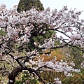 2014阿里山60.jpg