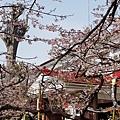 2014阿里山62.jpg