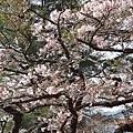 2014阿里山63.jpg