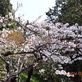 2014阿里山68.jpg