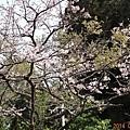2014阿里山69.jpg
