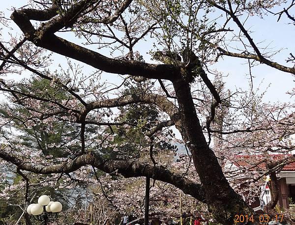 2014阿里山70.jpg
