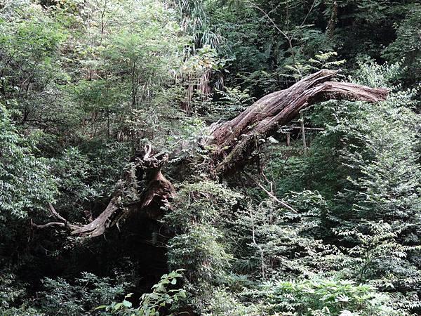 拉拉山31.jpg