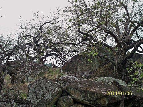 2011-14.jpg