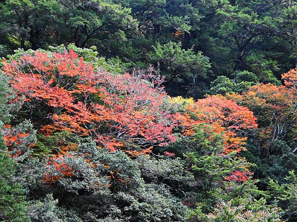 福壽山楓紅 (11).jpg