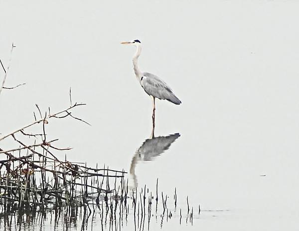 2014冬賞鳥 (19).jpg