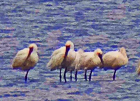 2014冬賞鳥 (25).jpg