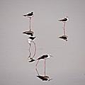 2014冬賞鳥 (43).jpg