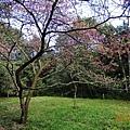 福山植物園 (9).jpg