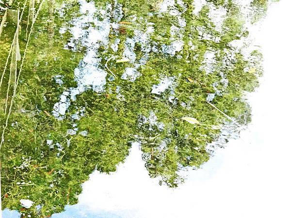 福山植物園 (11).jpg