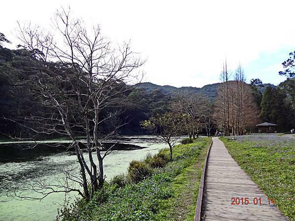 福山植物園 (13).jpg