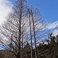 福山植物園 (19).jpg