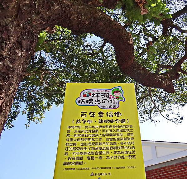 2015南投賞梅 (6).JPG