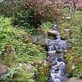 陽明山大島櫻、杜鵑~竹子湖海芋~20110315 (7).jpg