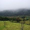 陽明山大島櫻、杜鵑~竹子湖海芋~20110315 (14).jpg