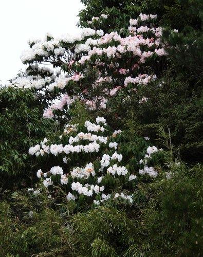 梨山、冬山厝、羅東夜市2012春遊宜蘭北橫〈一〉 (1).jpg