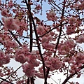 梨山、冬山厝、羅東夜市2012春遊宜蘭北橫〈一〉 (13).jpg