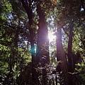 鎮西堡檜木林區~2012秋遊新竹(二) (12)