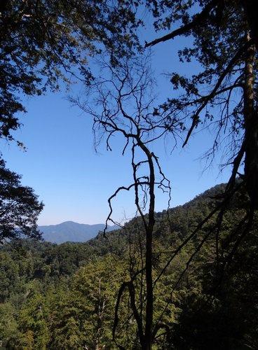 鎮西堡檜木林區~2012秋遊新竹(二) (4)