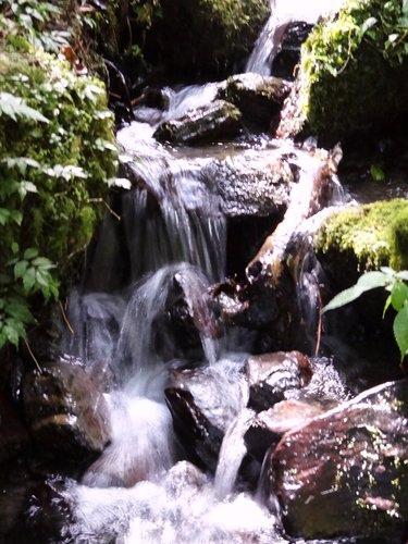 鎮西堡檜木林區~2012秋遊新竹(二) (5)